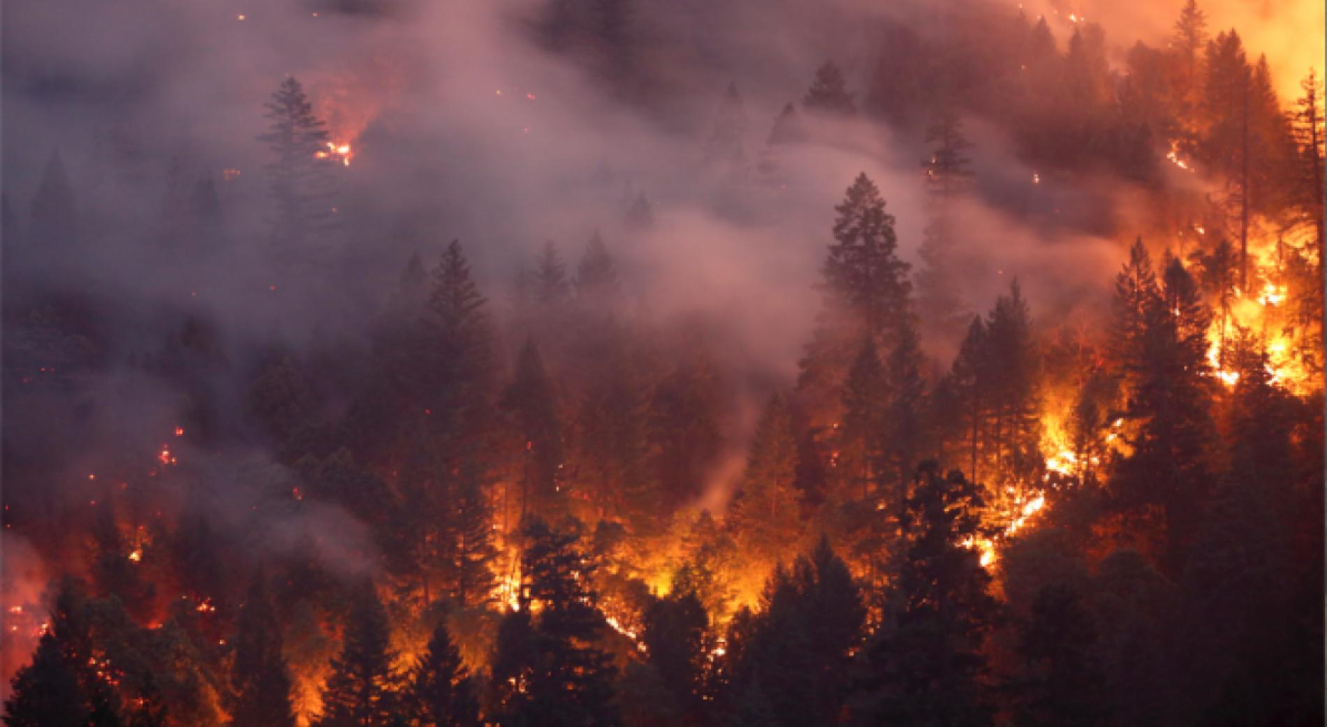 Болгары не пострадали в пожарах на Гран-Канарии