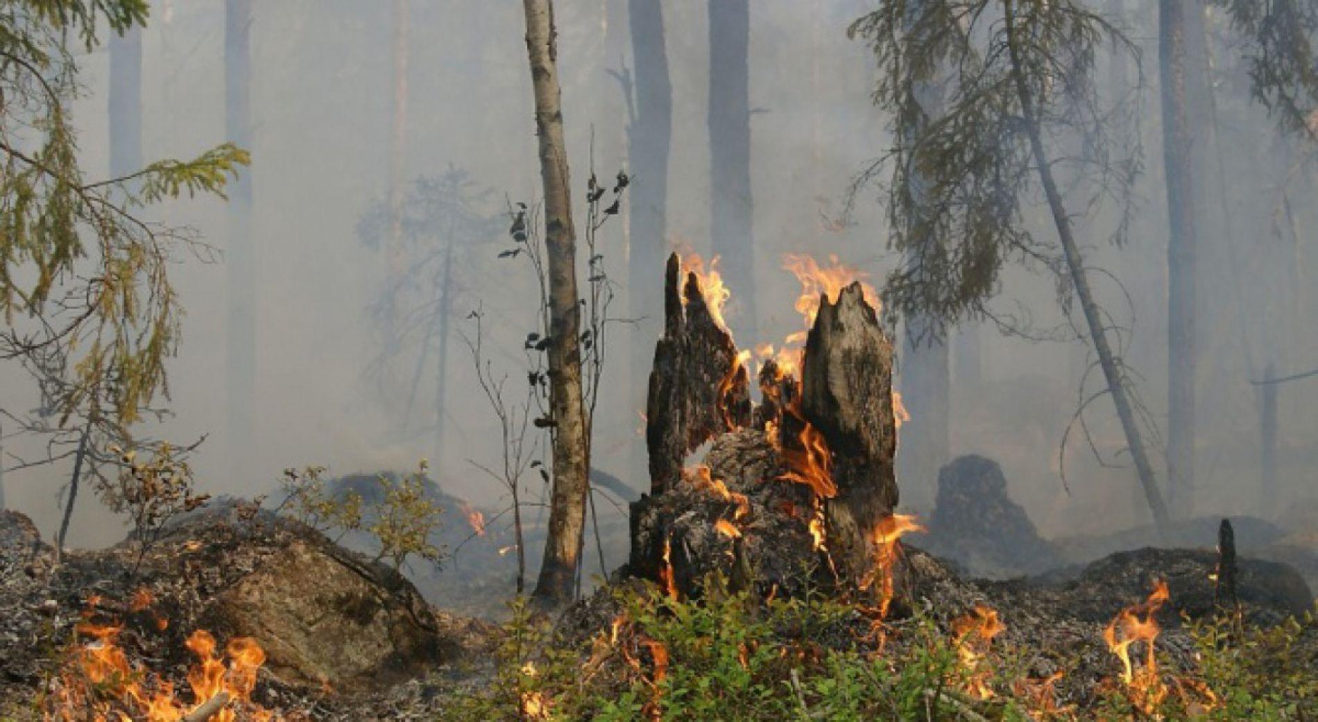 Пожары в Сливенском районе контролируются